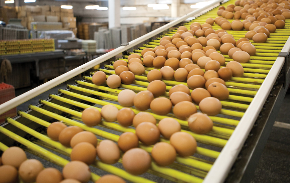Egg Processing Lines