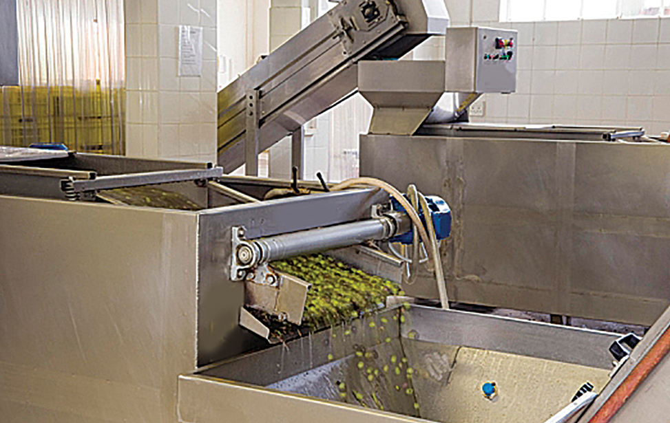 Olive Processing Lines